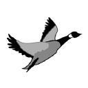 Grey Goose Graphics, LLC logo