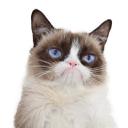 Grumpy Cat® logo icon