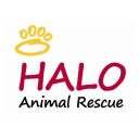 Halo Animal Rescue logo icon