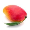 Haystack logo icon