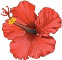 Advertiser logo icon