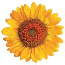 Hospice Uk logo icon