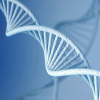 Animalgenetics.us logo