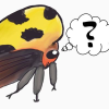 Askentomologists.com logo