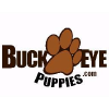Buckeyepuppies.com logo