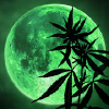 Cannabismoon.net logo