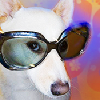 Doggies.com logo
