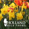 Hollandbulbfarms.com logo