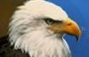 Messagetoeagle.com logo
