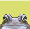 Naturespot.org.uk logo