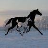 Northernhorse.com logo