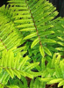 Paramountplants.co.uk logo