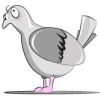 Propertypigeon.co.uk logo