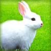 Rabbitbreeders.us logo
