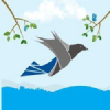 Trafficcrow.com logo