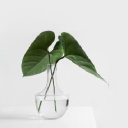 Zahra Publishing