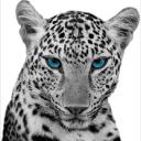 Wildcat Lending
