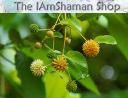 Iamshaman logo icon