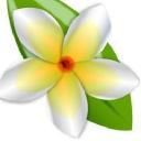 Ikebana Flores - Send cold emails to Ikebana Flores