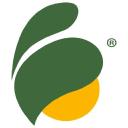Improved Nature Company Logo