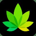 Indica Online logo icon