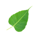 Insight Meditation Center logo icon