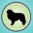 It's Dog Or Nothing logo icon