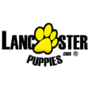 Lancaster Puppies logo icon