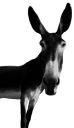 Lime Studios logo