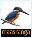 Maasranga Television logo