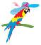 Macaws Infotech on Elioplus