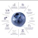 Macfrut logo icon