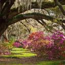 Magnolia Plantation & Gardens logo