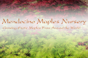 Mendocino Maples Nursery logo