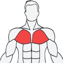 Muscle Wiki logo icon