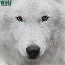 Join Wolf Conservation Center logo icon