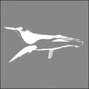 Natural History Photography Blog logo icon