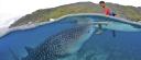 Oslob Whale Sharks logo icon