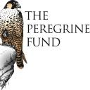 The Peregrine Fund logo icon