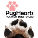 PugHearts the Houston Pug Rescue logo