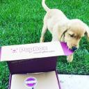 Pup Box logo icon