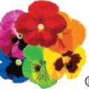 Pure Pansy, LLC logo