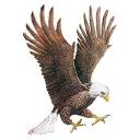 Record logo icon