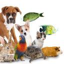 Royal Pet Supplies