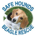 Safe Hounds Beagle Rescue, Inc. logo