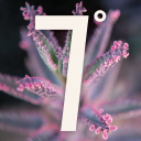 Seven Degrees logo icon