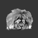 Sleepy Lion Software logo