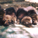 Tallahassee Museum logo icon