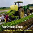 Tendercrop Farms logo icon