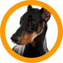 Lead Hound logo icon